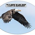 American Bald Eagle 2015-25 Isolated by Thomas Young