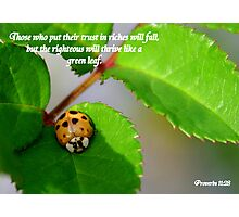 Proverbs 11:28 Photographic Print
