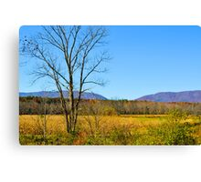 Virginia Back Road Canvas Print
