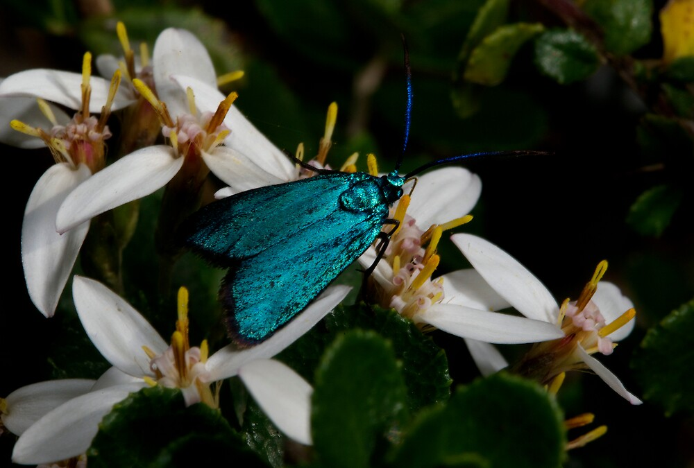 Iridescent Insect by GP1746
