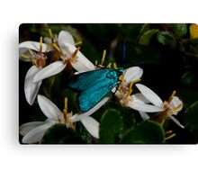 Iridescent Insect Canvas Print
