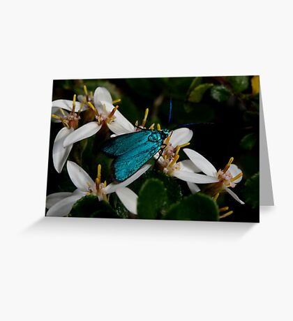 Iridescent Insect Greeting Card