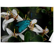 Iridescent Insect Poster