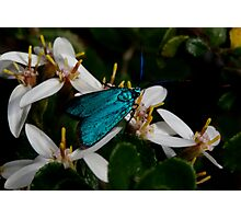 Iridescent Insect Photographic Print