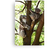 Mother & Son Koalas Canvas Print