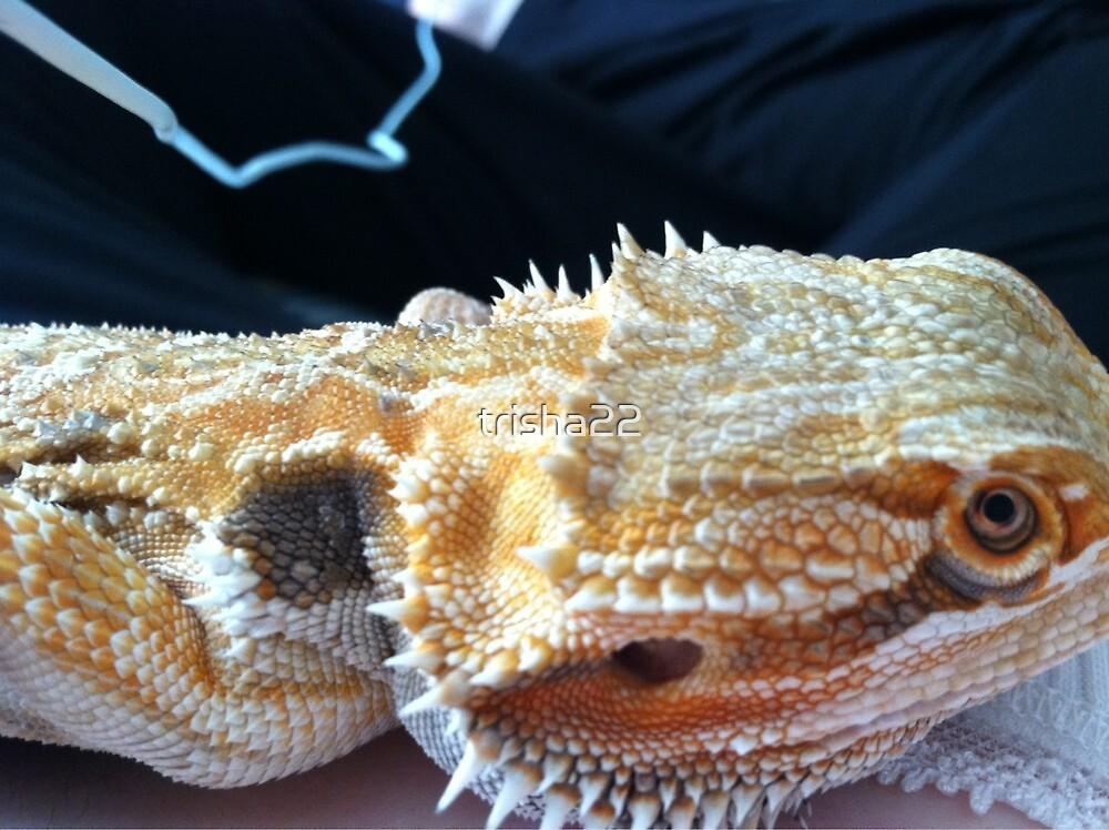 Bearded Dragon by trisha22