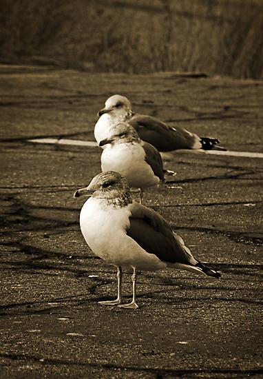 Gull Parking Only by Corri Gryting Gutzman