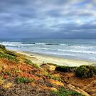 San Diego Beach by K D Graves Photography