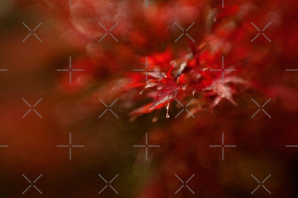 Maple by Mel Brackstone