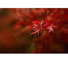 Maple Photographic Print