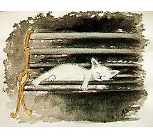 une petite sieste.. Photographic Print