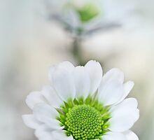 Sweet Serenity... by Bob Daalder