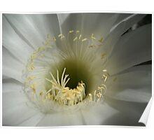 Kaktus Flower Macro. Poster