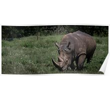 Wildlife - Rhinoceros Poster