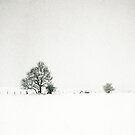 Tree and fence in a snowstorm by Steven Taylor