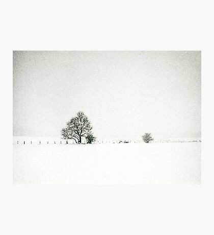 Tree and fence in a snowstorm Photographic Print