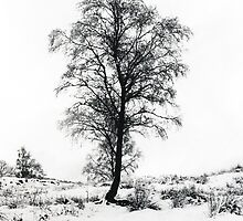 Tree in the snow by Steven Taylor