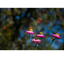 A Bee in Paradise Photographic Print