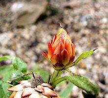 Rose Bud, Dead!!! by blackdawn12345