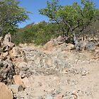 Namibia Kaokoveld by kunene276
