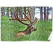Bear Country USA, Wildlife Poster