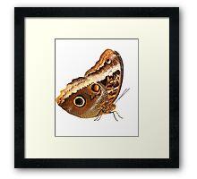 Owl Butterfly Framed Print