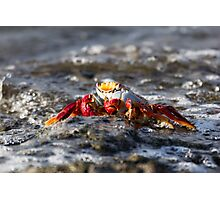 Sally Lightfoot Crab Photographic Print