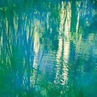 Pond Reflections by Armando Martinez