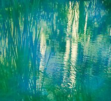 Pond Reflections by Armando Martinez
