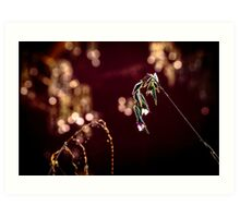 water plant with blossom, bokeh Art Print