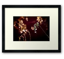 water plant with blossom, bokeh Framed Print