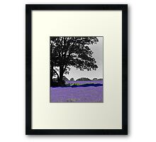 Mayfield Lavender selective colouring Framed Print