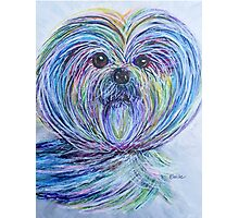 Purse Pup Portrait ... SHIH TZU Photographic Print