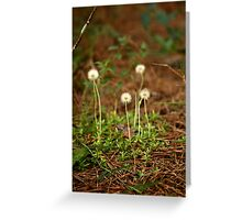 A small world.  Greeting Card