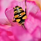 Bee Pink by Graeme Nix