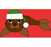 Brown Baby Seal with Christmas Green Santa Hat Photographic Print