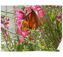 Butterfly Wears Polka Dots Poster