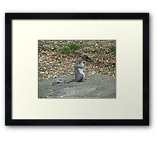 Do It Gangnam Style - Gray Squirrel goes Korean Framed Print
