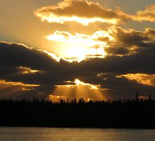 Sunrays in all directions. by Nicole Gushue