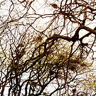 The Crow's Nest by Fara