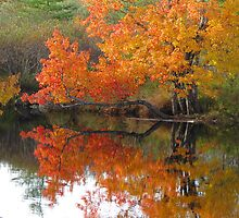 Autumn tree branch on water by Nicole Gushue