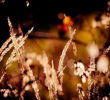 Autumn Grass in Sunlight by mroppx