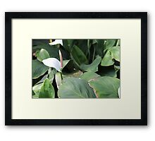 Philippine Flower Framed Print