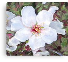 Almond (Prunus dulcis) blossoms Canvas Print