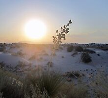 White Sunset by podspics