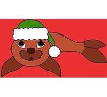 Red Baby Seal with Christmas Green Santa Hat Photographic Print