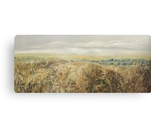 Agricultural landscape. Wheat Fields and olive trees  Canvas Print