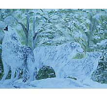 Snow Wolves Photographic Print