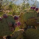 Prickly Pear Cactus in the Desert by Julia Washburn