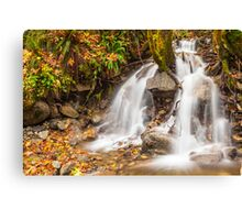Un-named mountain stream in the Beckler River Valley Canvas Print